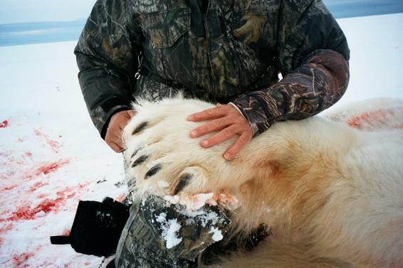 Gary Martin Polar Bear Paw