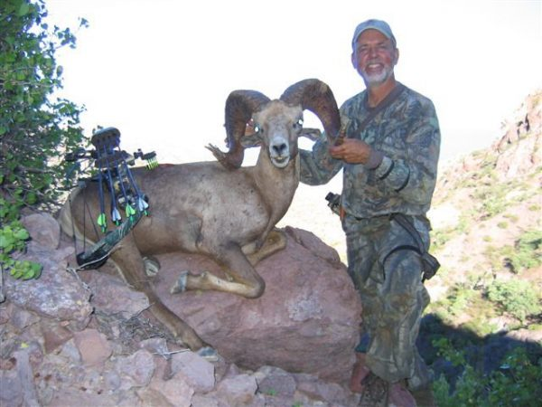 Gary Martin Desert Sheep